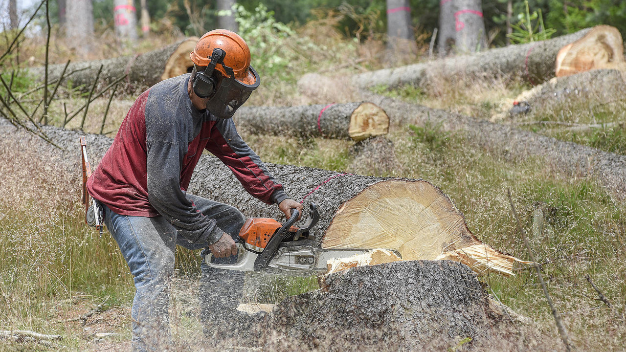 Kůrovcová kalamita, která zasáhla zhruba třetinu ze všech lesních porostů v Česku, způsobila výrazný pokles objemu obchodů s lesními pozemky.