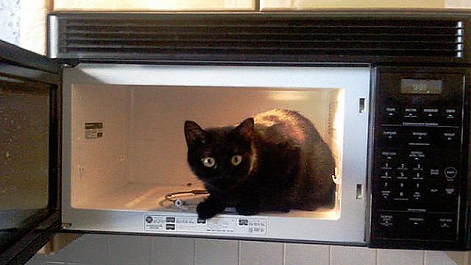 Kočka v mikrovlnce (ilustrační foto)