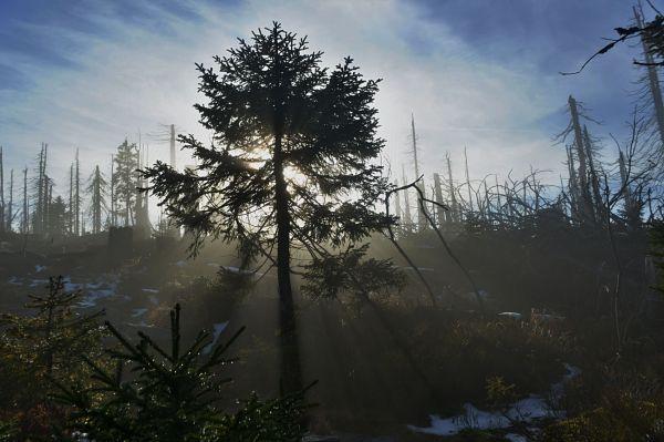Šumavský národní park. Ilustrační foto