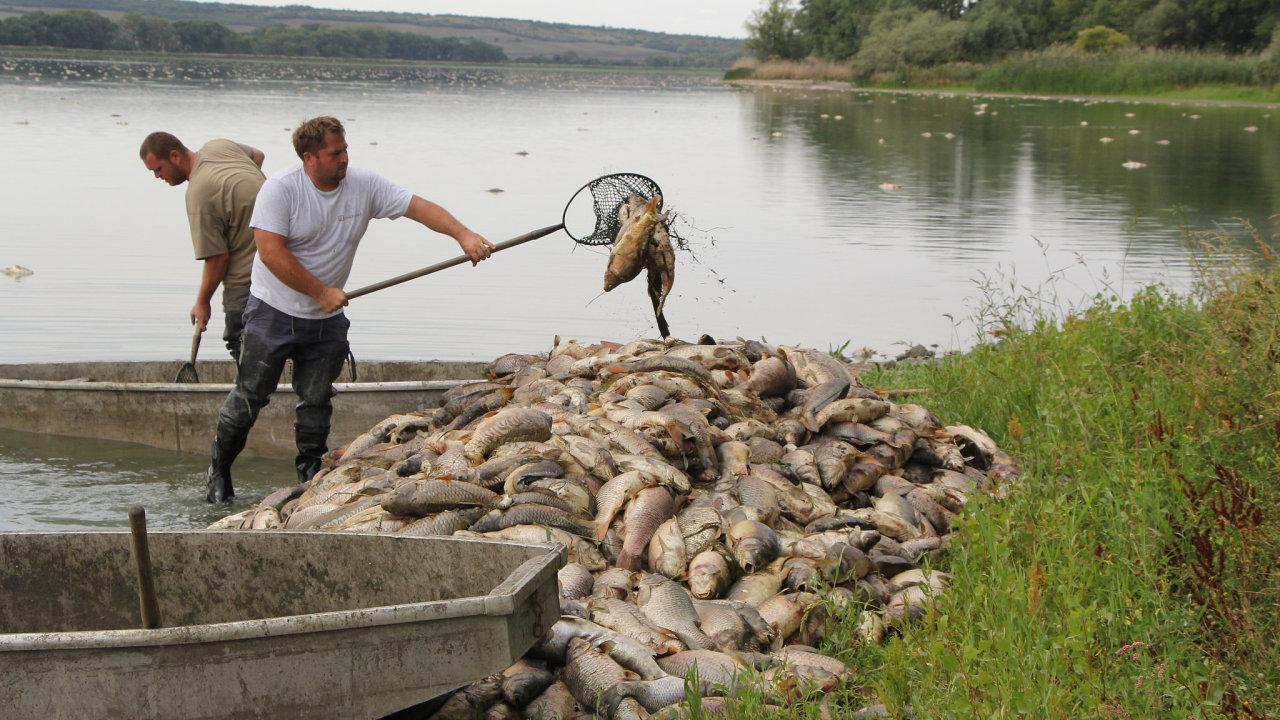 Na místě je 25 pracovníků rybářství, kteří leklé ryby odstraňují.