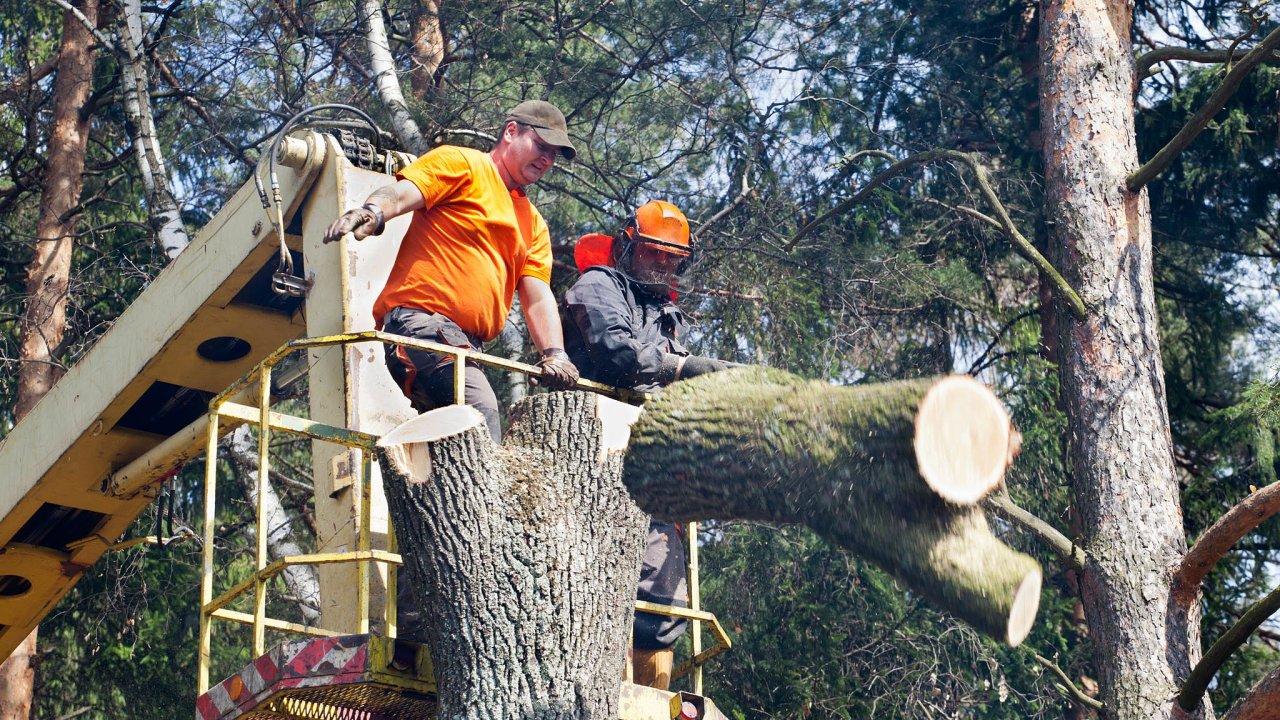Nasituaci včeských lesích reaguje Mendelova univerzita vBrně. Otevřela studijní program technologie amanagement zpracování dřeva.