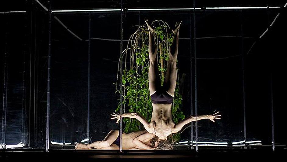 Představení Animal Exitus mělo premiéru v Divadle Ponec.