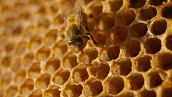 L�tky jako streptomycin, sulfathizol a podobn� se nesm� v medu vyskytovat - Ilustra�n� foto.