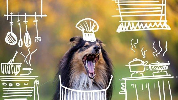 Soukromý psí útulek Dogpoint vydal charitativní kalendář Tajný život psů.