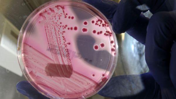 Bakterie, ilustrační foto