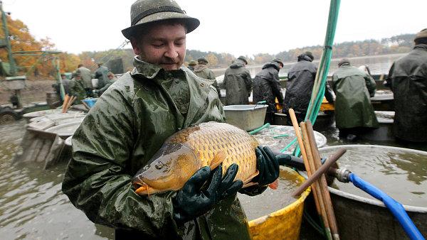 V�lov rybn�ka, ilustra�n� foto