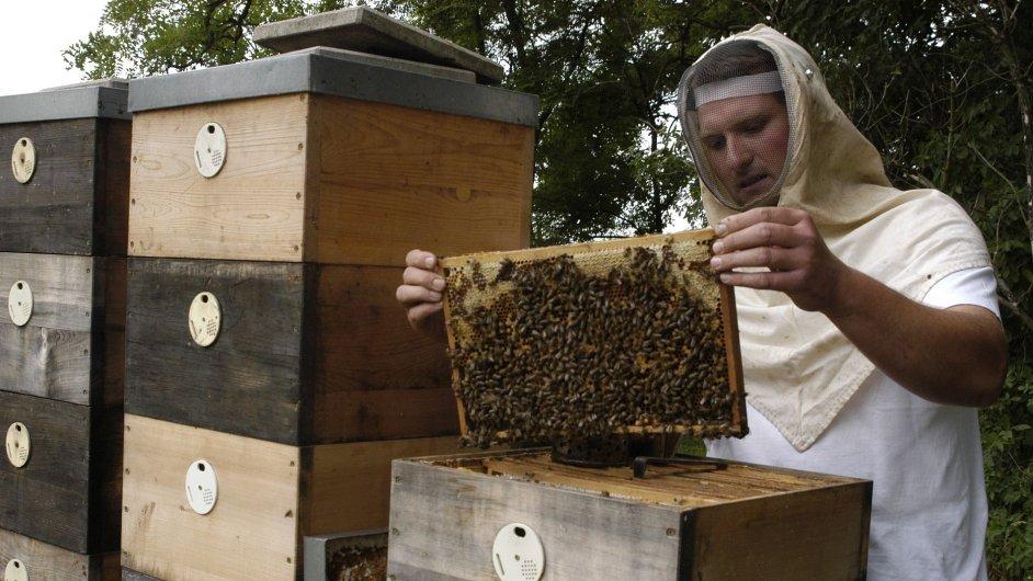 Ilustrační foto. Rozmach včelařství na Slovensku.