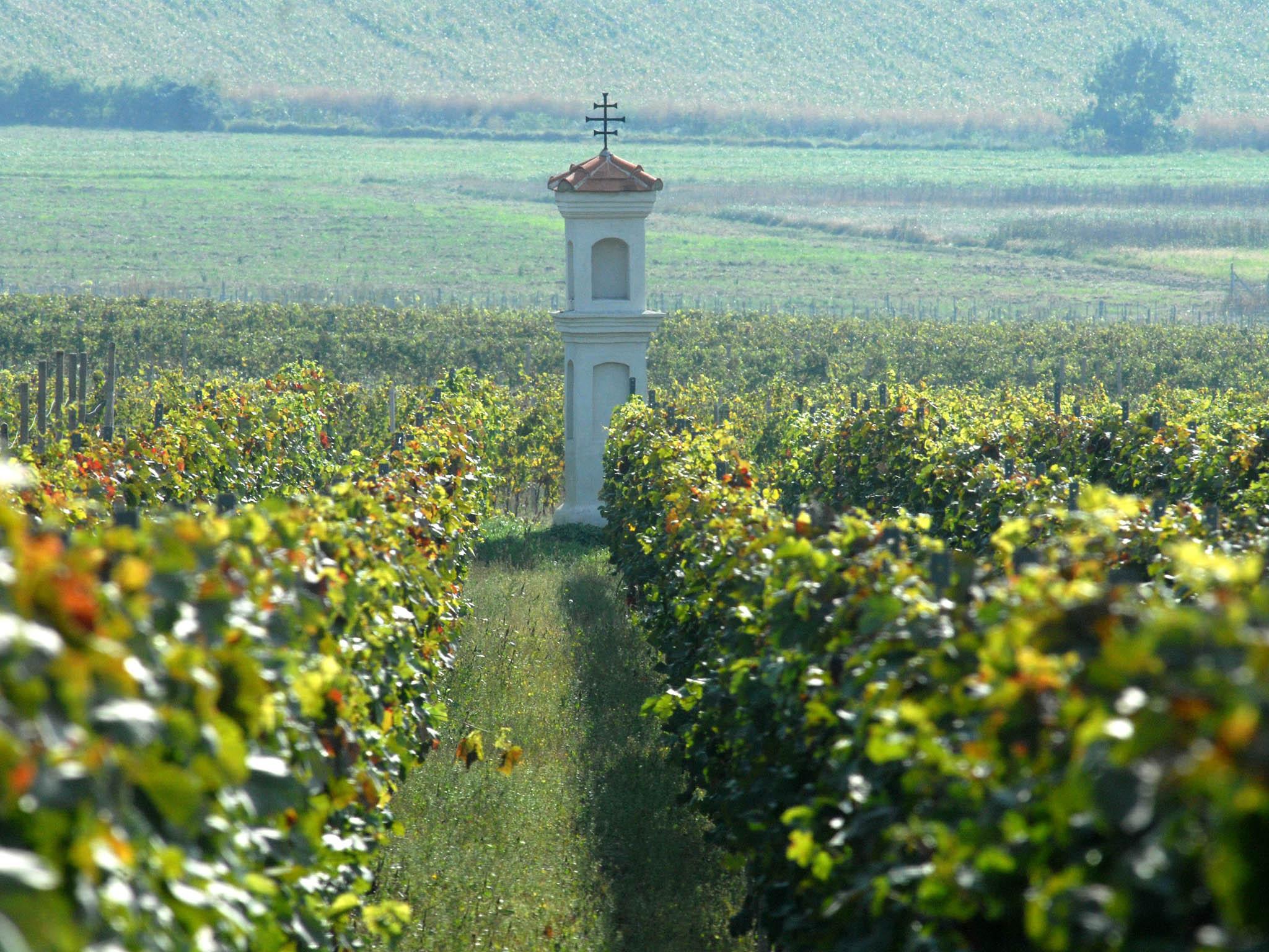 Základ vinařských stezek tvoří páteřní trasa spojující Znojmo s Uherským Hradištěm.