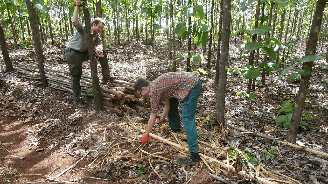 Byznys na nesprávném místě: Hlavní problém původního plánu na byznys s teakovým dřevem byla volba příliš suchého místa – dřevo roste pomalu.