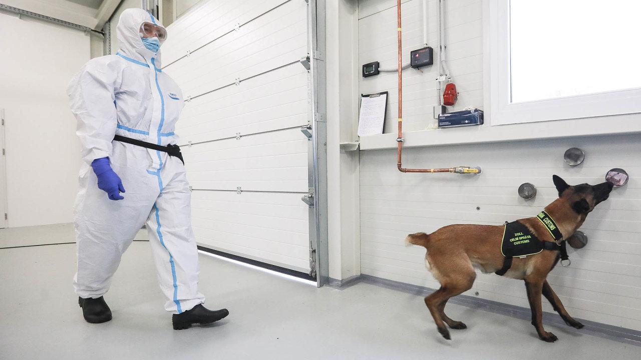 Nový úkol pro psy celníků Celní správa vyčlení šest zesvých více než 70 služebních psů narozpoznávání lidí sonemocněním covid-19. Zatím hledali drogy či peníze.