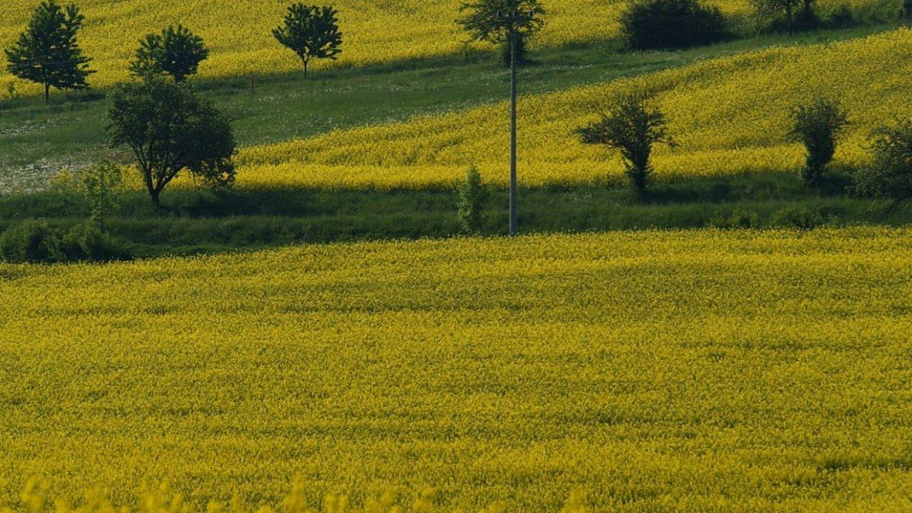 Nejstarší typ biopaliv v Česku symbolizují pole s řepkou olejkou.