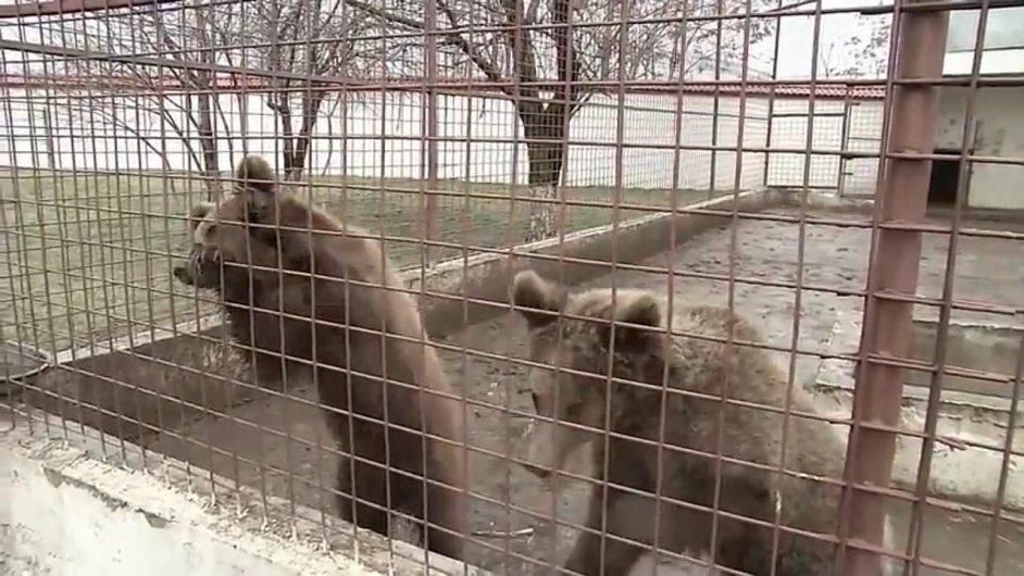Medvědi chovaní rumunským gangsterem Ionem Balintem