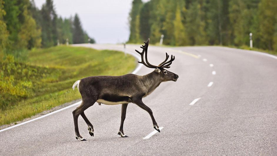 Sob na silnici ve Švédsku