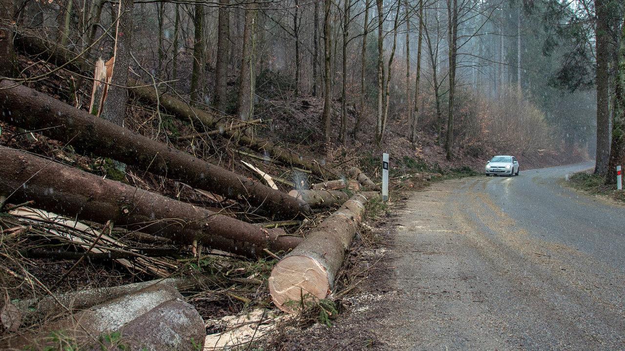 Zaposledních 15 let zmizelo jen odkrajských silnic čtvrt milionu stromů, ztoho sto tisíc jich padlo bez náhrady.