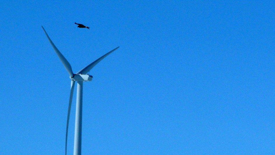 Orel skalní letí poblíž větrné elektrárny společnosti Duke Energy