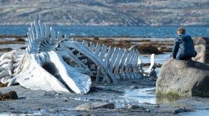 Nov� film Andreje Zvjaginceva nazvan� Leviatan se odehr�v� u rusk�ch hranic s Finskem.
