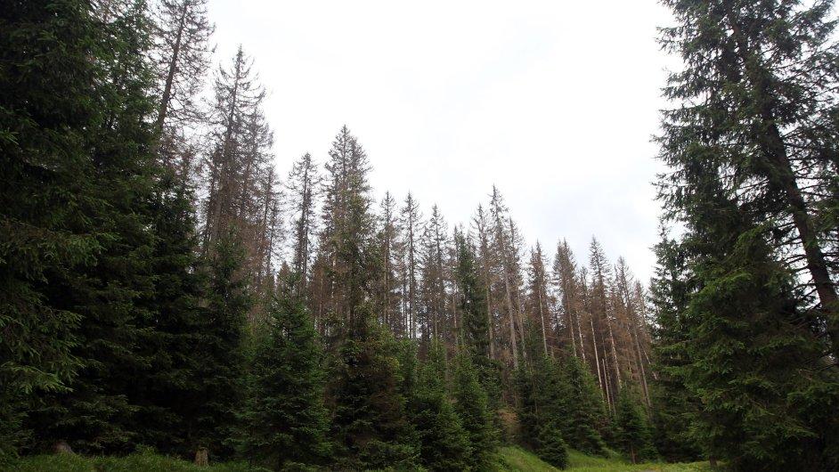 Proces chřadnutí smrku lze považovat za nejvýznamnější ekologickou katastrofu. Proti usychání smrků není obrany. Řešení je zakládat smíšené lesy.