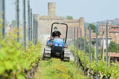 Vína Barolo patří mezi nejlepší červená vína Itálie. Vyrábí se v oblasti Piemont z odrůdy Nebbiolo. Na snímku jedna z tamních vinic.