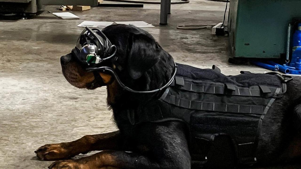 Brýle srozšířenou realitou pro psy mají sloužit kevzdálenému zadávání povelů nabojišti.