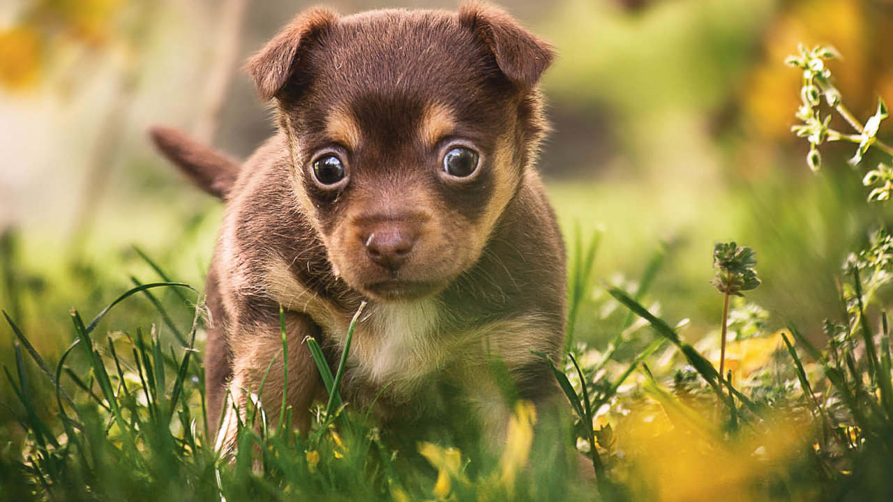 Než si pořídíte psa, dobře si to promyslete.Vaše volba totiž namnoho let ovlivní život všech zúčastněných– vás, vaší rodiny ičtyřnohého parťáka.