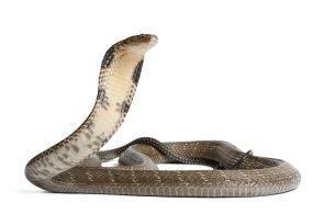 Zoo v Plzni chystá expozici nejjedovatějších hadů světa i rostlin z Alp