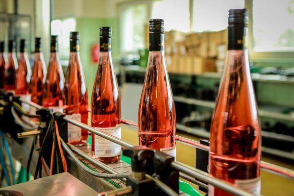 Svatomartinské víno ze Zámeckého vinařství Bzenec