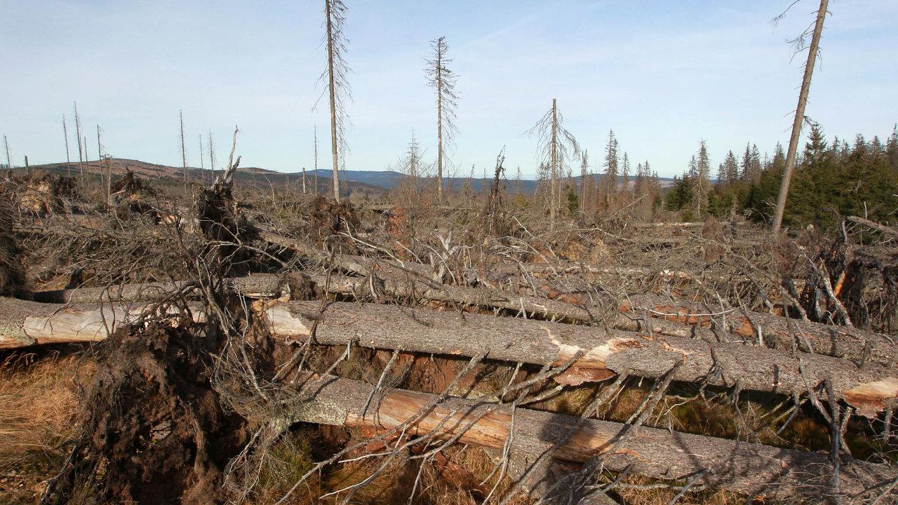 Současná kalamita ukazuje, že lesním škůdcům nejsnáze podléhají monokultury.