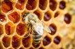 Pl�stev medu je teprve za��tek budouc�ho n�poje.