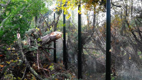 V Česku si orkán Herwart vyžádal dva lidské životy a až půl milionu domácností se ocitlo bez proudu. Celková škoda dosáhla skoro 1,4 miliardy korun.