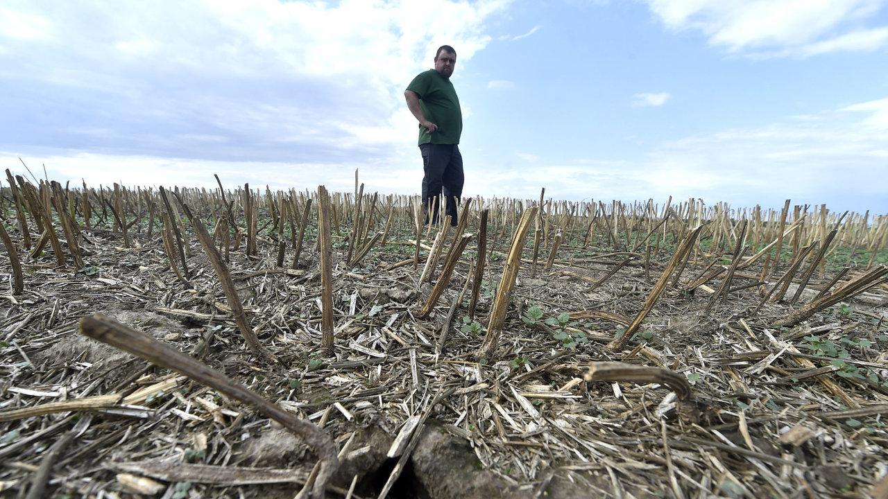 Sucho a částečně i přemnožení hlodavci decimují úrodu zemědělských plodin na Osoblažsku. Farmář ze Slezských Pavlovic Pavel Müller ukazuje nory hrabošů na poli.
