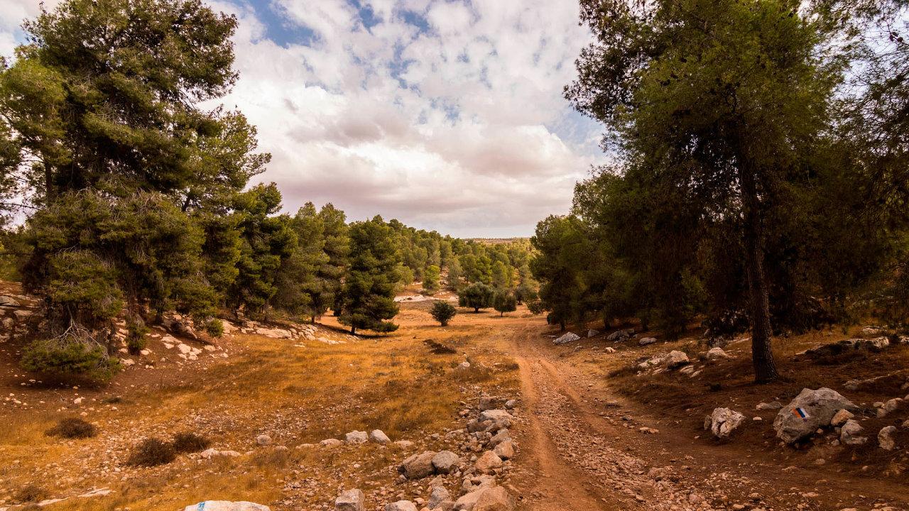 Zpohledu Evropana je Jatirský les spíš lehce prořídlý lesík, nic, co by stálo zapozornost. Těchto 30 km2 lesa je ale největším vysázeným lesem naúzemí Izraele. Anavíc se vněm blyští člověkem vytvořená vodní nádrž.