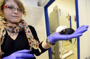 Vědkyně Helena Fulková: Lidé mě za klonování zvířat nenávidí