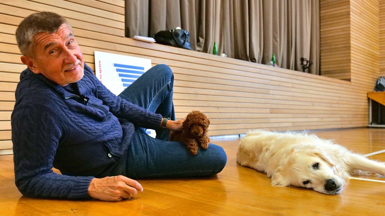Čau lidi, máme pudla a graf. Andrej Babiš se dvěma ze svých tří psů při natáčení pravidelného nedělního videa