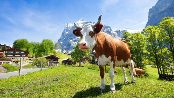 Tradi�n� kravsk� zvonce mu pr� odh�n�ly hosty. Rakousk� hoteli�r tak farm��e za�aloval o statis�ce