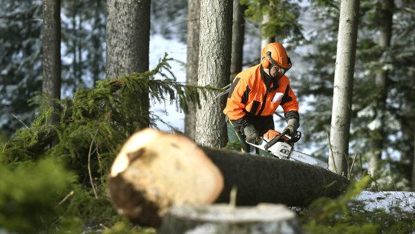 """Výnosná surovina. Vliv šedé ekonomiky má výrazný podíl na""""mizení"""" dřeva."""