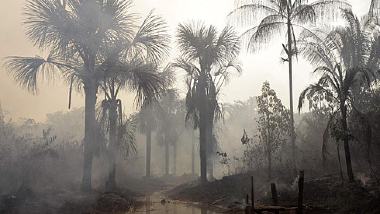 Amazonský prales, ilustrační foto