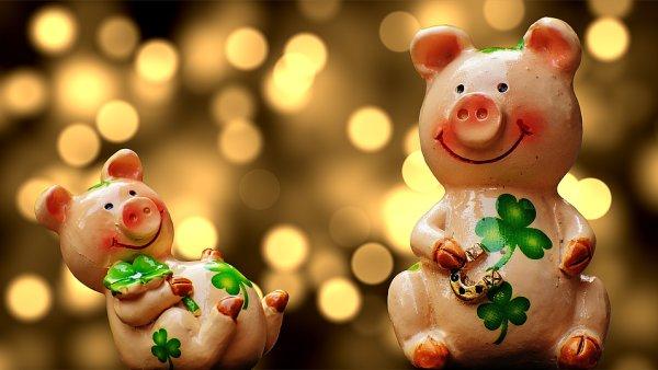 Sow Lucky Pig Lucky Charm Luck Cute Piglet 1914363