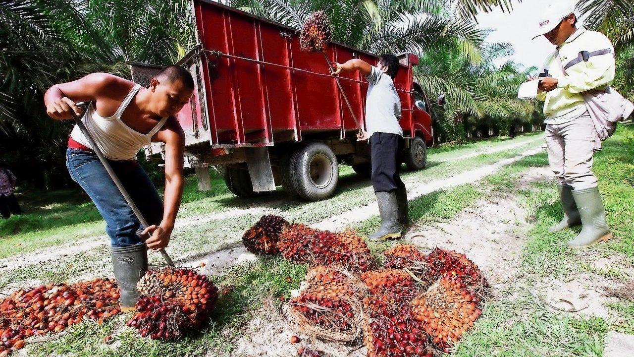 Riziko pro pralesy