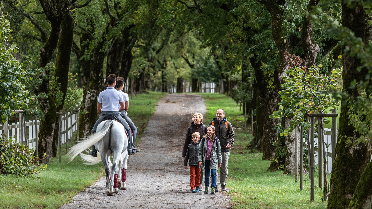Hřebčín Lipica na jihu Slovinska, který proslavili bílí lipicáni, patří kromě Julských Alp či ledovcových jezer mezi nejnavštěvovanější místa v zemi.