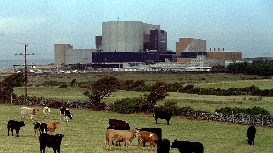 Na archivním snímku z roku 1995 se pase dobytek před jadernou elektrárnou Wylfa Magnox ve Walesu.