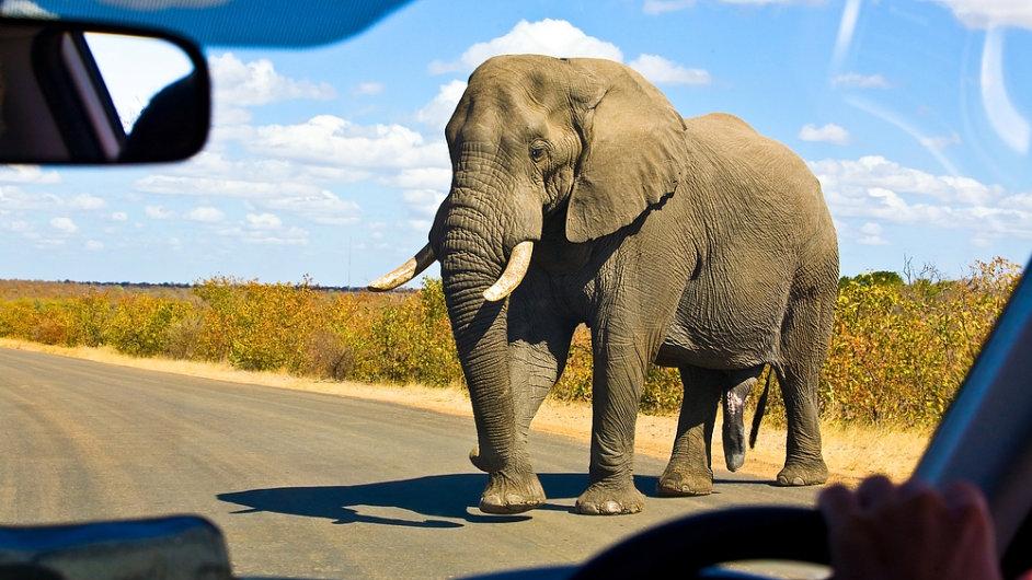 Potkat slona přecházejícího cestu není v Krugerově parku žádnou vzácností.