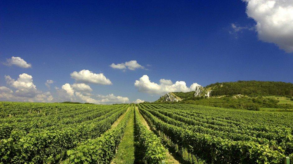 Vyrazte na cyklojízdu pálavskými vinohrady - Ilustrační foto.