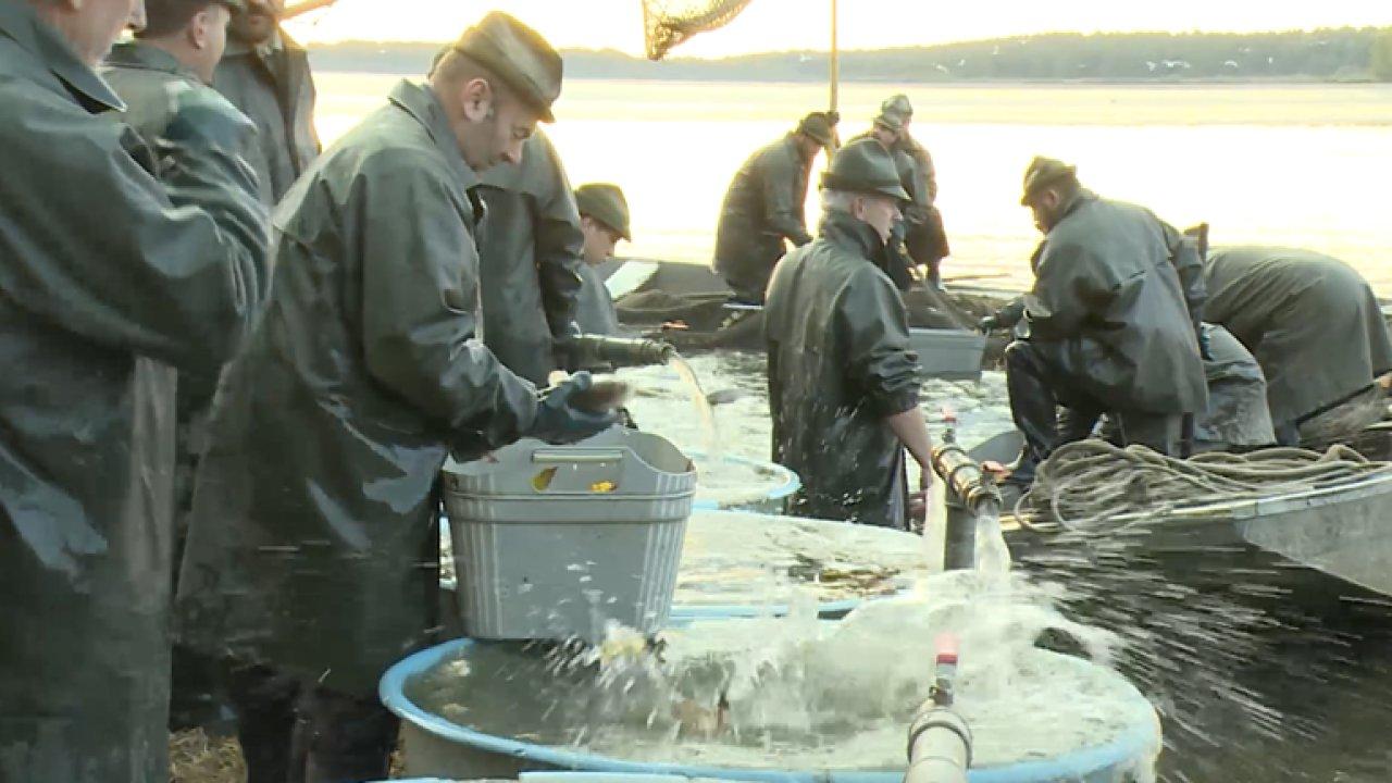 Rybáři předpokládají, že kvůli suchu dojde ke zvýšení cen kapra