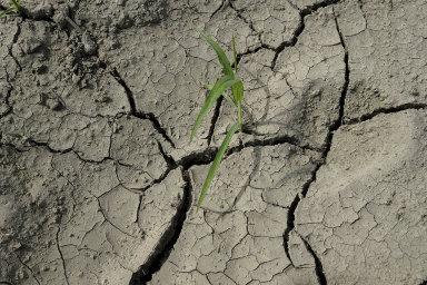 Zemědělcům se už několikátý rok po sobě daří ekonomicky hůř. Stojí za tím sucho, ale letos například také přemnožení hraboši.