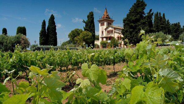 Kr�l �pan�lsk�ch �erven�ch Tempranillo za��v� boom na vinic�ch cel�ho sv�ta
