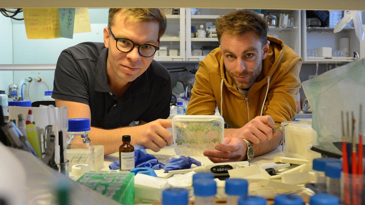 Jak rostou došířky: Ondřej Smetana (vpravo) popsal sArim Pekkou Mähönenem mechanismus tloustnutí rostlin.