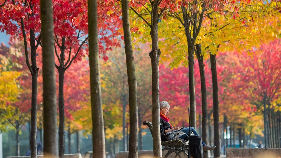 podzim, stromy