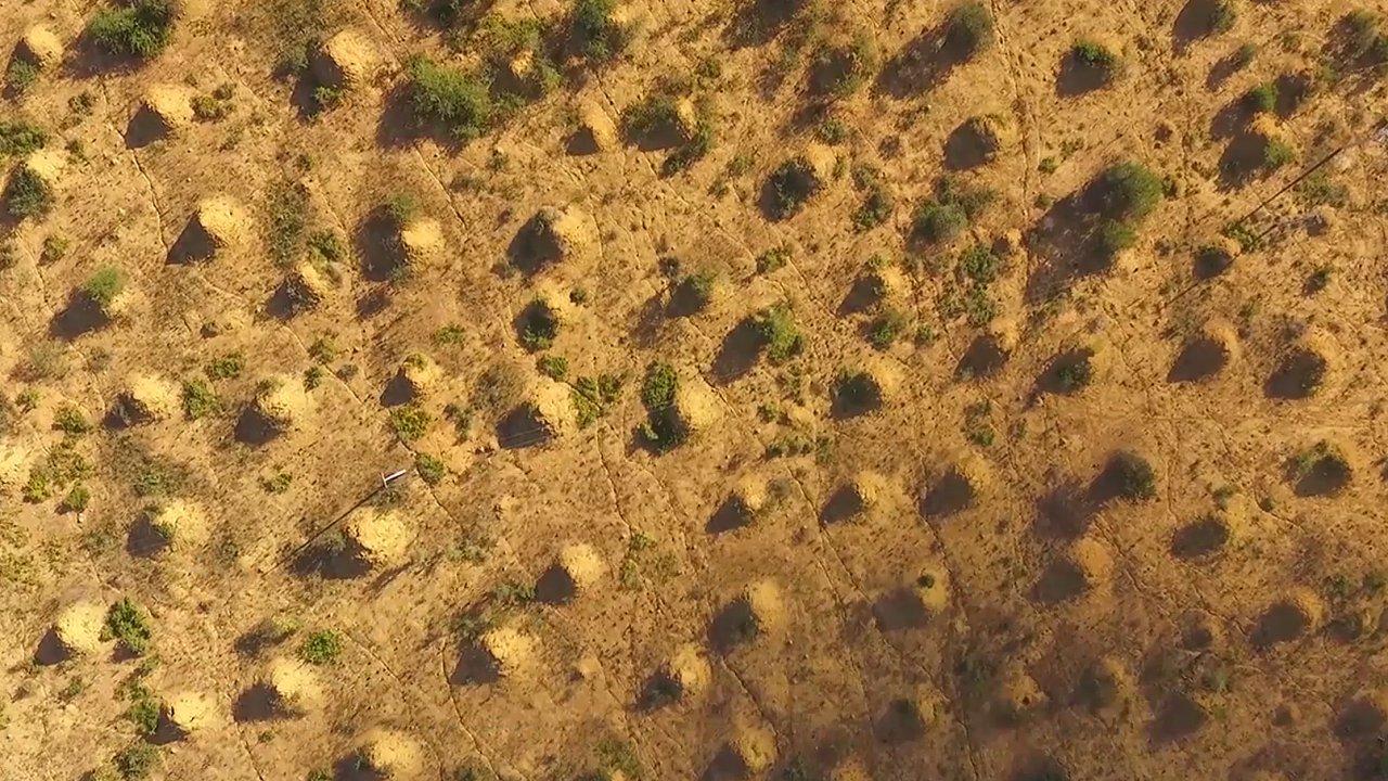 Nově objevená termití kolonie v Brazílii.