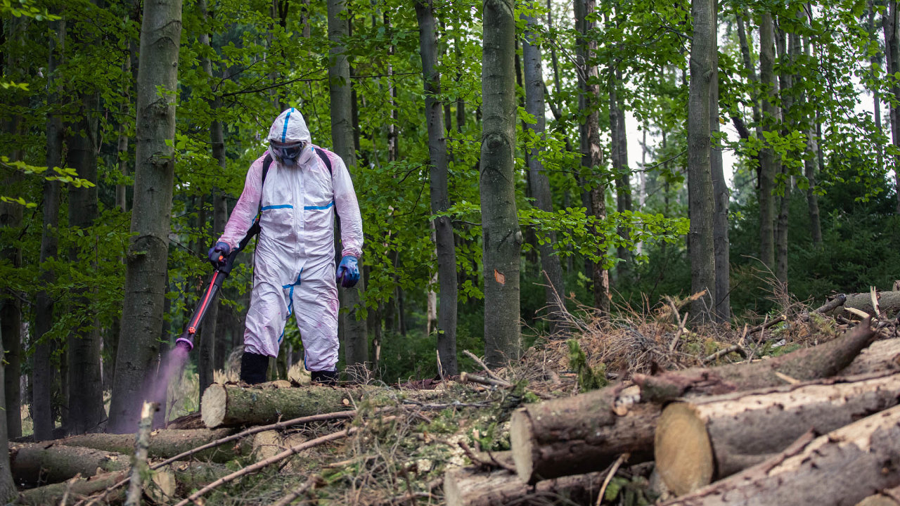 Kůrovcová kalamita likviduje lesy vcelém Česku. Chemicky ošetřovaného dřeva je natrhu nadbytek.