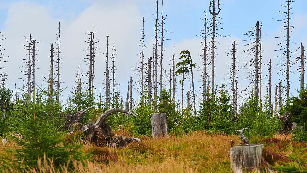 Lepší nechat přírodě: Existují lesy, kde lze kácením napáchat více škody než užitku. Například těžce přístupná místa. Některé kůrovcem napadené lesy by bylo lepší nechat stát. Na to ale dotace nejsou.